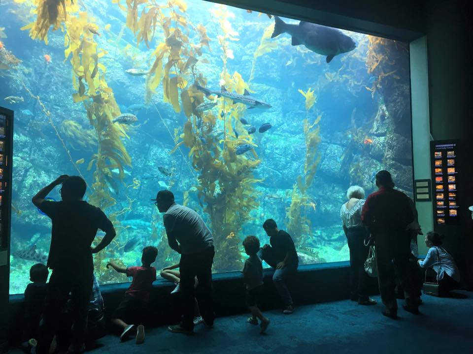 Birch Aquarium: The Ultimate Itinerary for a Day at the ...