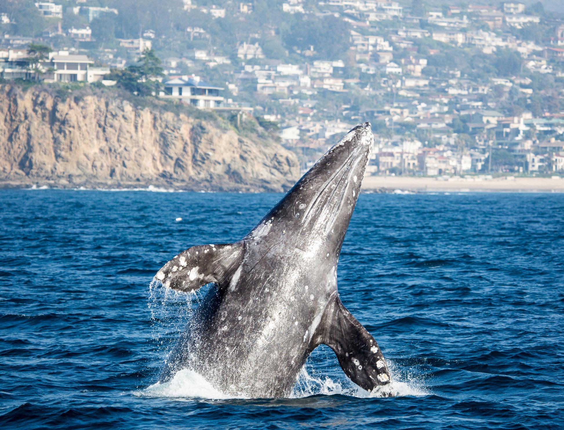 Best Whale Watching Tour In Monterey