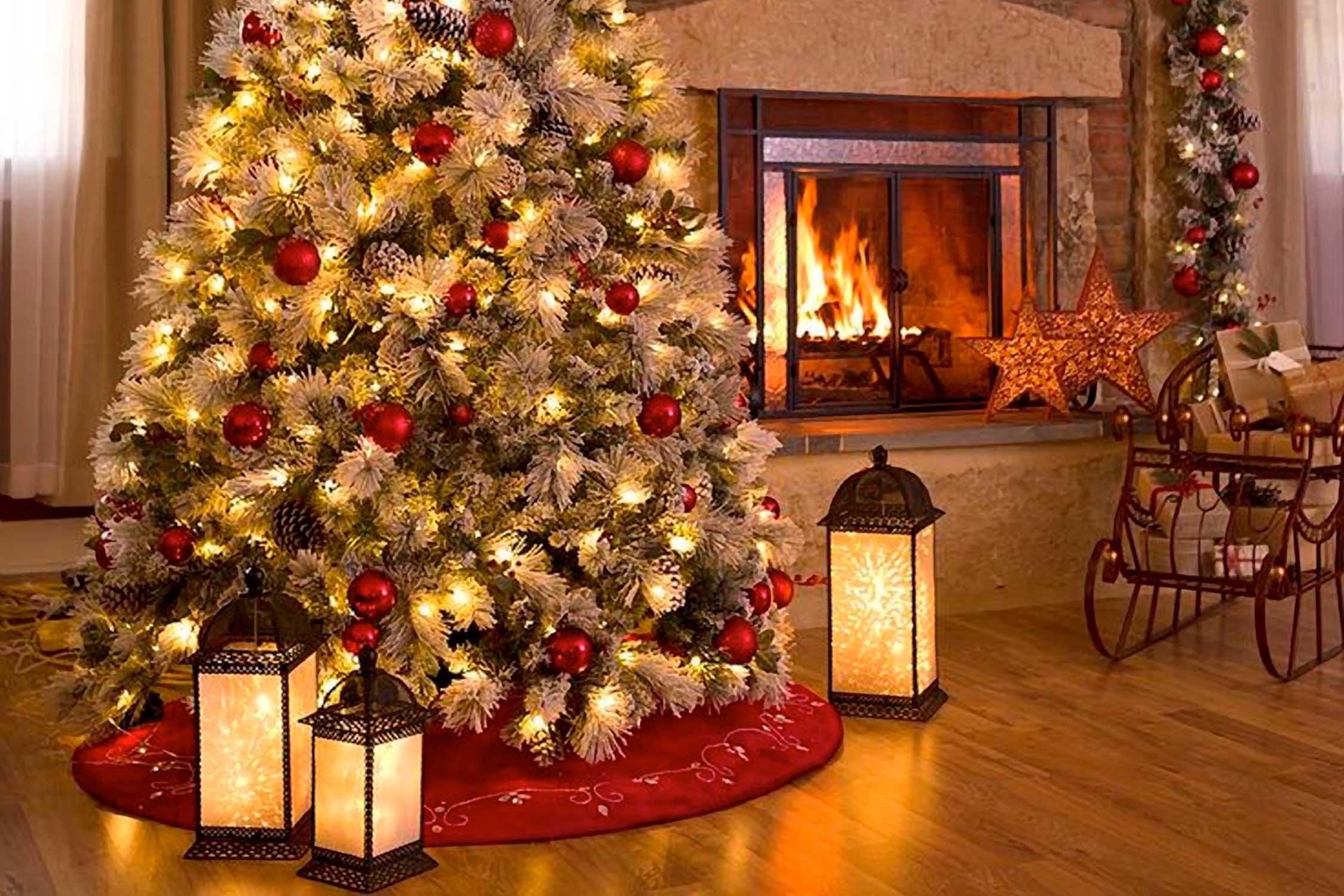 Best Christmas Trees in San Diego
