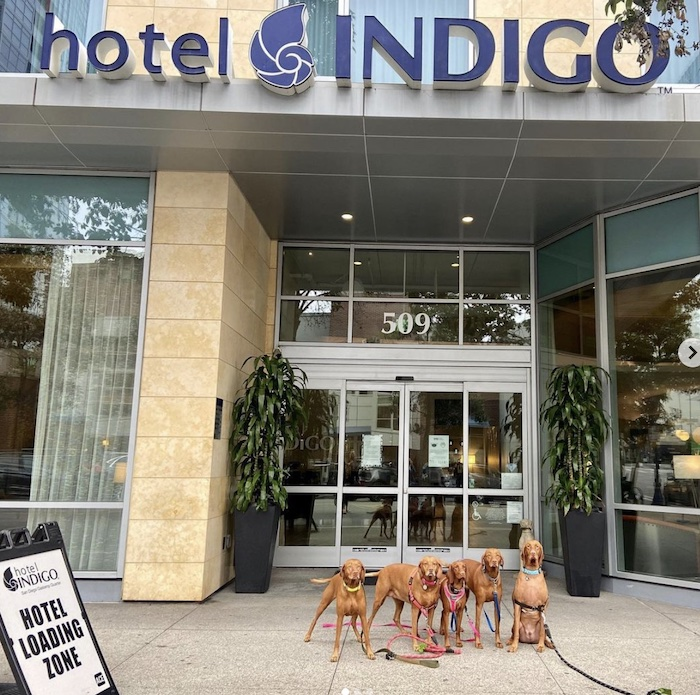 Dogs in front of Hotel Indigo.