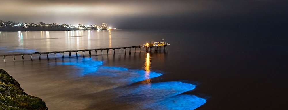 Bioluminescence in San Diego