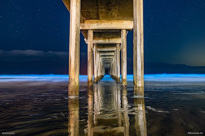 Bioluminescent waves in San Diego