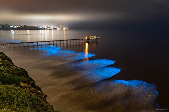 Bioluminescence is a natural phenomena in San Diego