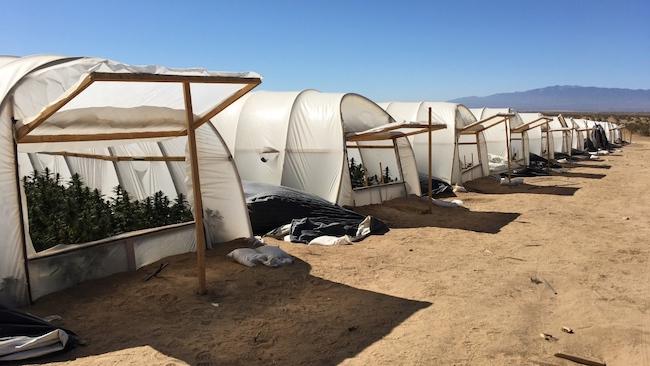 Antelope Valley Drug Bust